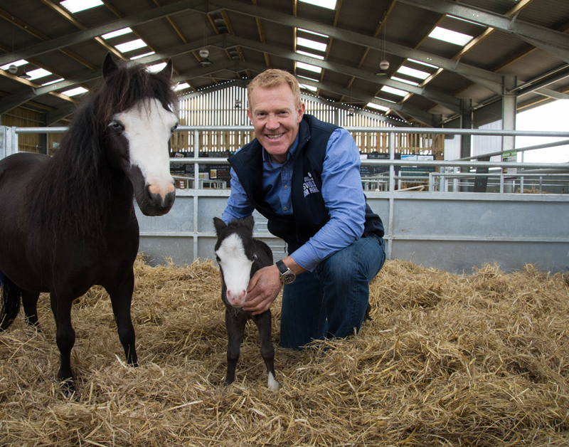 ADAM HENSON AND EQUULEUS FELIPE